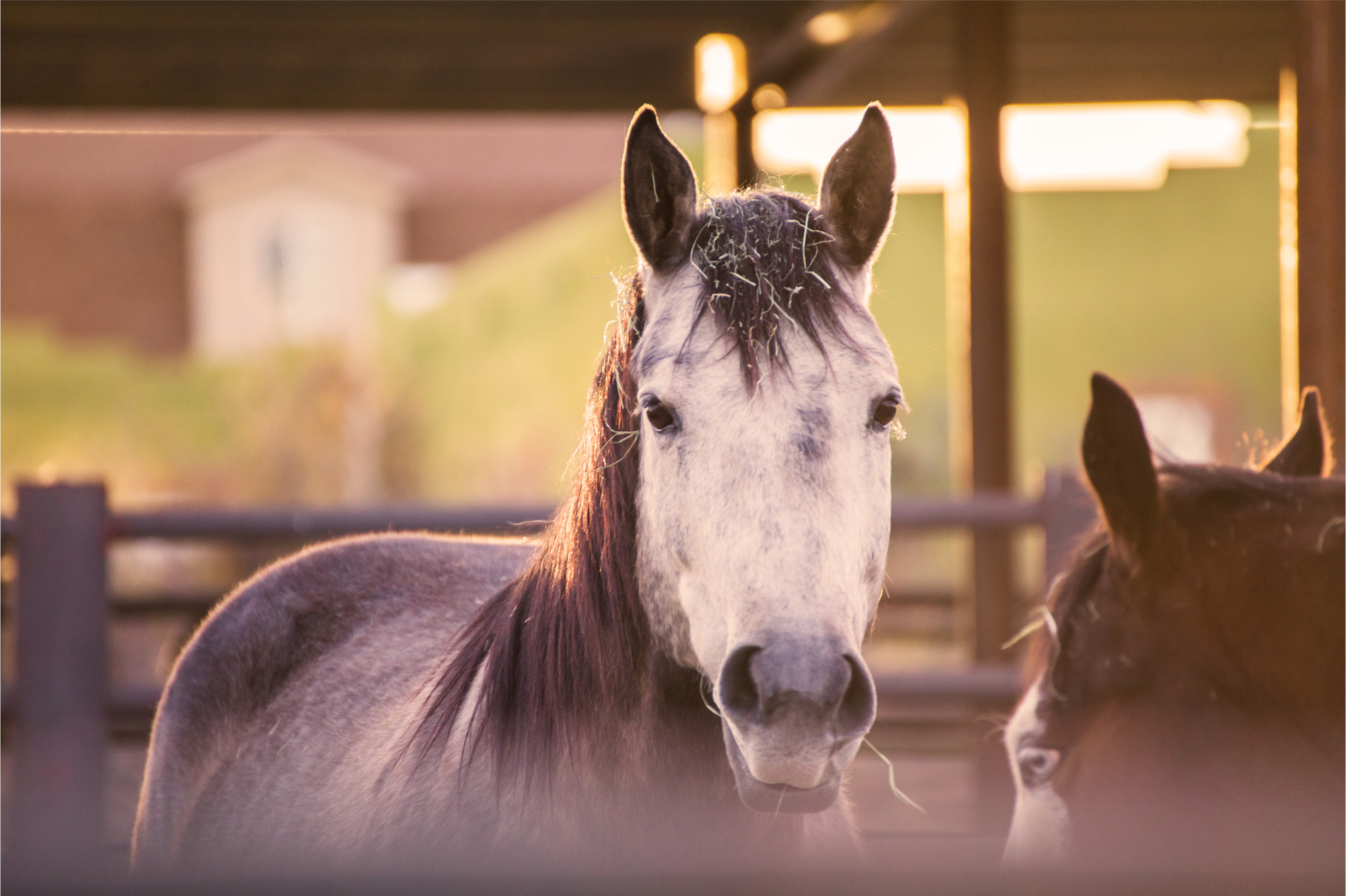 Canyons Equestrian Enclave Henderson